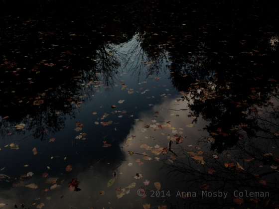 sky-pond-trees-night-2014_Anna-Mosby-Coleman