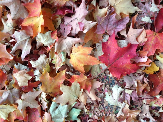 October_Leaves_2015_Anna-Mosby-Coleman