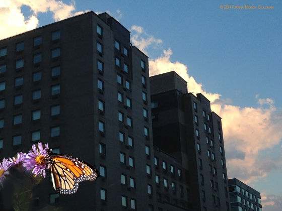 monarch-nyc-AnnaMosbyColeman