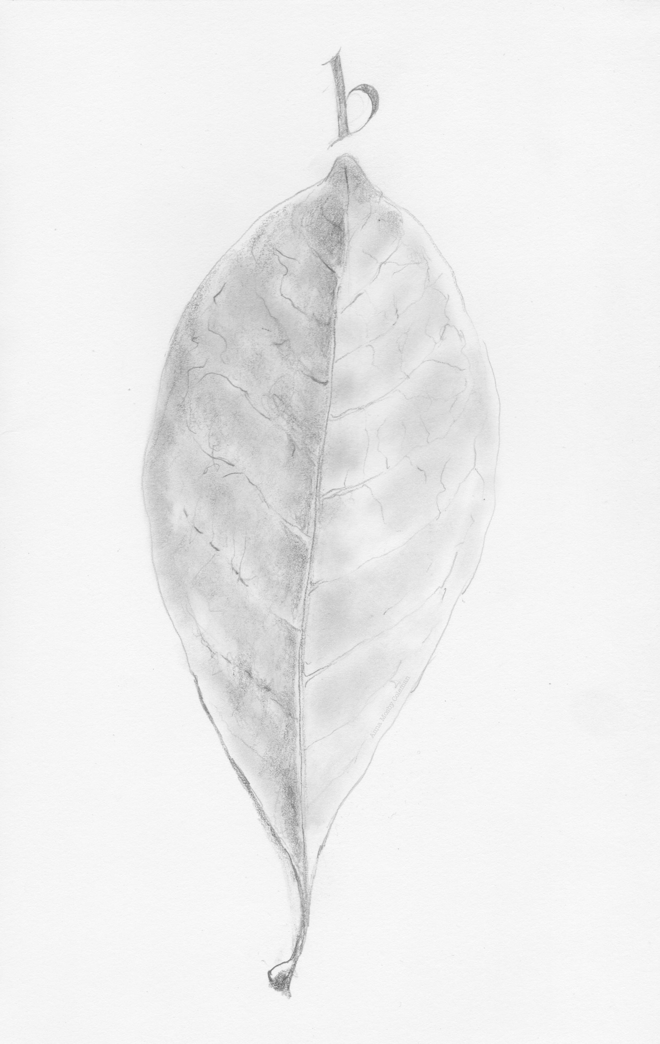 b-leaf_september2017_©AnnaMosbyColeman