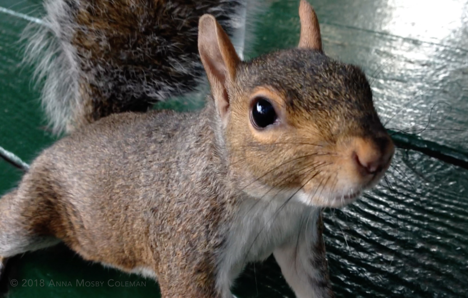 Groundhog_Day_Squirrel-Disputes-Weather-Prediction.jpg