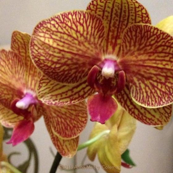 Stuart-Orchid-Memorial
